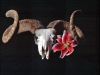 ram-skull-and-lily